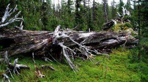Leven-in-dood-hout