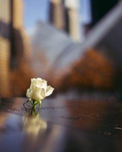 Enkele roos voor slachtoffers van 9/11
