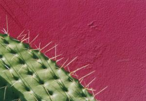 Prikkelende cactus met roze achtergrond